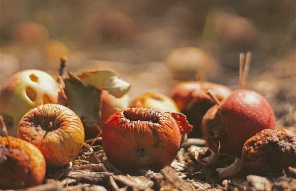 Έρευνα για τη Σπατάλη Τροφίμων: Τα «ΠΕΤΑΜΕΝΑ» Φαγητα των Ελληνικών Νοικοκυριών